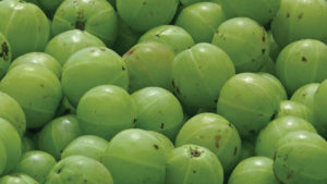 5-surprising-beauty-benefits-of-amla-pernambut-blogger
